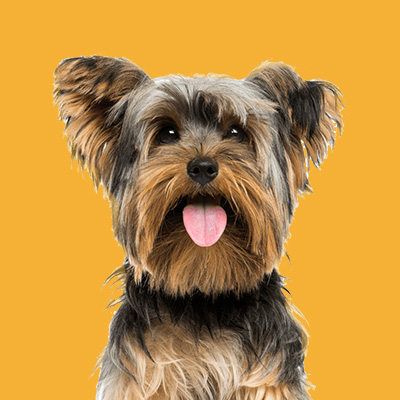 Dog Worx Professional Dog Grooming Services in the Bay of Islands. Safe and stress-free environment for your dog. All breeds and sizes groomed.